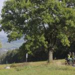 Prague–Dresden XC mountain bike holiday